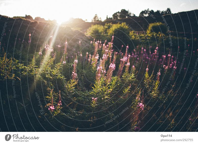 Nature Green Summer Plant Sun Joy Animal Landscape Environment Happy Dream Pink Fresh Beautiful weather Bushes Infinity