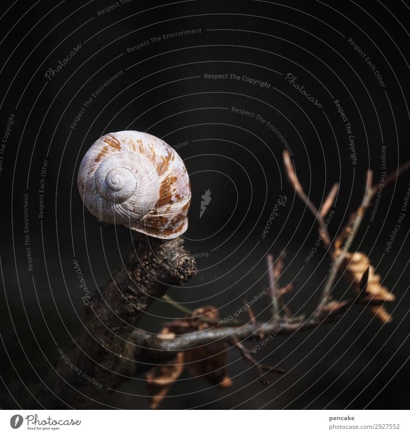 outstanding | light catcher Elements Earth Tree Forest Snail Dark Near Dry Warmth Snail shell Branch Death Resurrection Stick out Light (Natural Phenomenon)