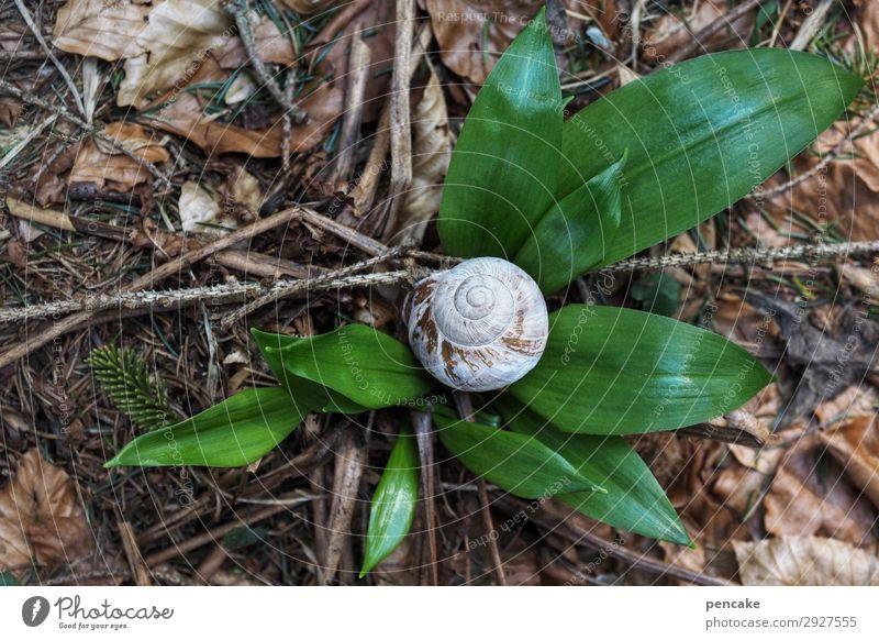 anfang und ende Bärlauch Waldboden Schneckenhaus Frühling Jahreslauf Lebenslauf Knoblauch grün Beginn