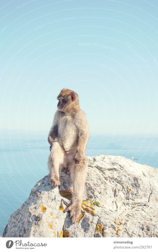 you monkey! Nature Cloudless sky Horizon Beautiful weather Ocean Animal Monkeys 1 Looking Sit Vacation & Travel Animal portrait Apes Mammal Rock Stone