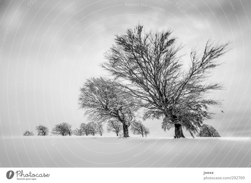 Sky Nature Old White Tree Clouds Landscape Winter Black Mountain Cold Snow Horizon Field Large Whimsical