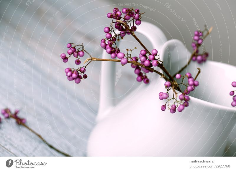purple Lifestyle Winter Plant Bushes Agricultural crop love pearl bush fruit of the palate Jug Milk churn Vase Authentic Elegant Cold Natural Retro Beautiful