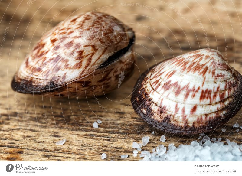 sea almond Food Seafood Herbs and spices velvet mussel Mussel Salt sea salt Nutrition Organic produce Diet Wood Fresh Healthy Delicious To enjoy Pure Quality