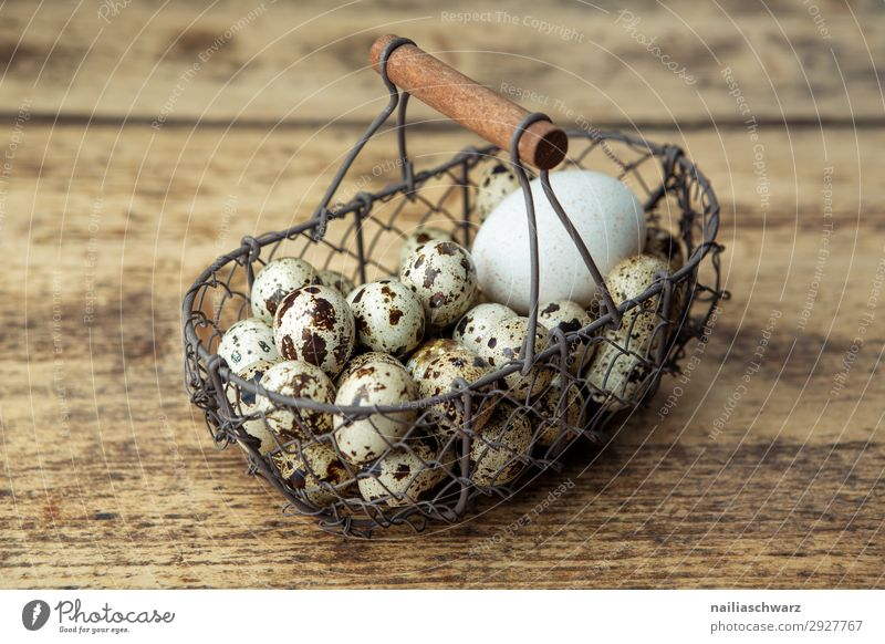 guinea fowl eggs Food Egg Nutrition Organic produce Vegetarian diet Diet Lifestyle Healthy Health care Healthy Eating Basket Wire basket Containers and vessels