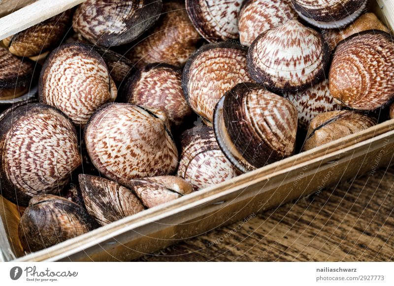 sea almond Food Seafood velvet mussel dog cockle Mussel Nutrition Organic produce Slow food Lifestyle Healthy Wood Ornament Line Simple Fresh Delicious Brown