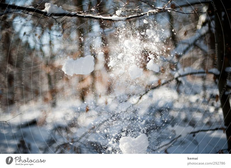 Snow falling from branches Winter Environment Nature Plant Beautiful weather Ice Frost Snowfall Tree Twig Branch Forest To fall Bright Cold Winter light