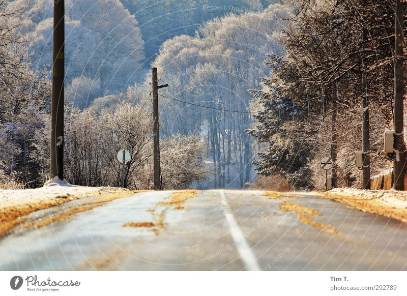 Bulgaria Environment Sunlight Winter Snow Tree Forest Traffic infrastructure Road traffic Motoring Street Loneliness Freedom Country road Colour photo