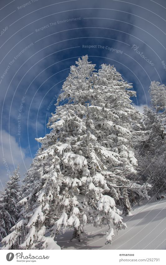 Sky Nature Vacation & Travel Blue White Tree Landscape Winter Forest Mountain Cold Environment Snow Snowfall Weather Ice