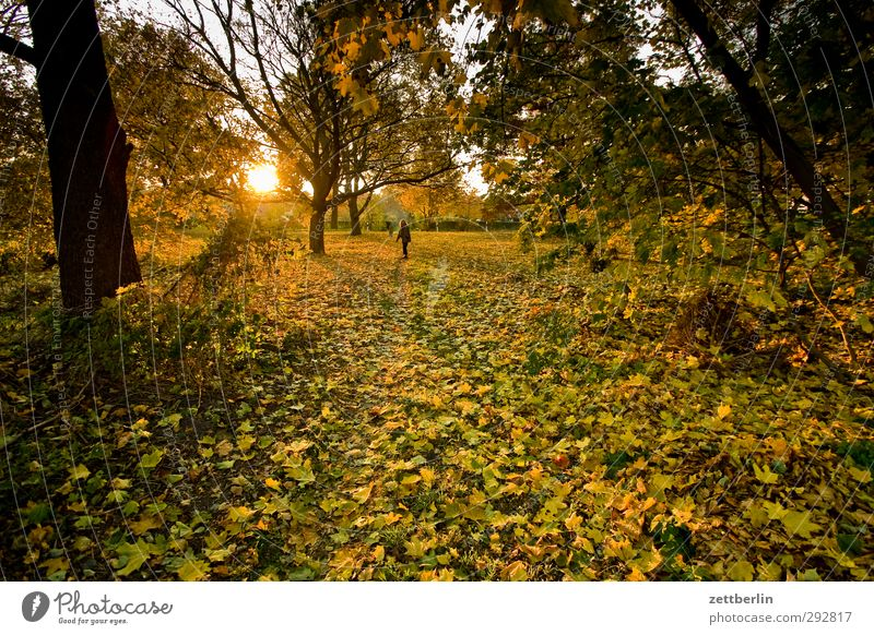 Sunset in autumn Garden Woman Adults 1 Human being 45 - 60 years Environment Nature Landscape Autumn Weather Beautiful weather Wild plant Park Meadow Forest Joy