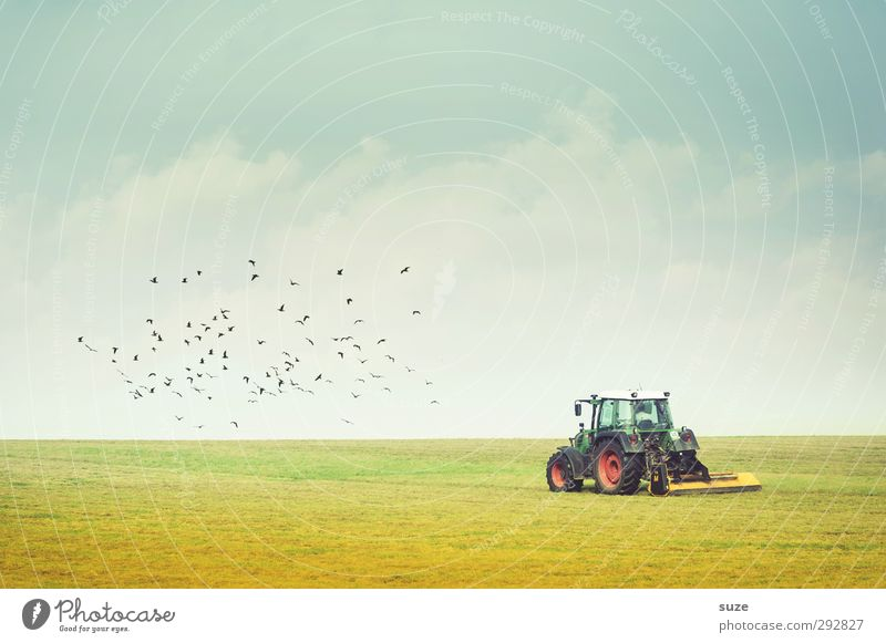 Full of farming Summer Work and employment Agriculture Forestry Machinery Technology Environment Nature Landscape Sky Horizon Beautiful weather Meadow Field