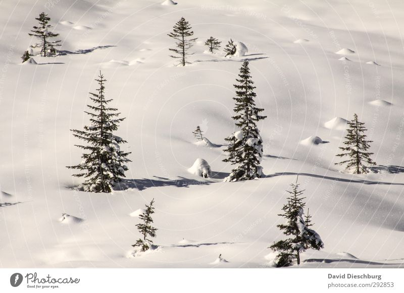 Vacation & Travel Blue Plant White Tree Landscape Animal Winter Forest Black Snow Ice Beautiful weather Frost Alps Fir tree