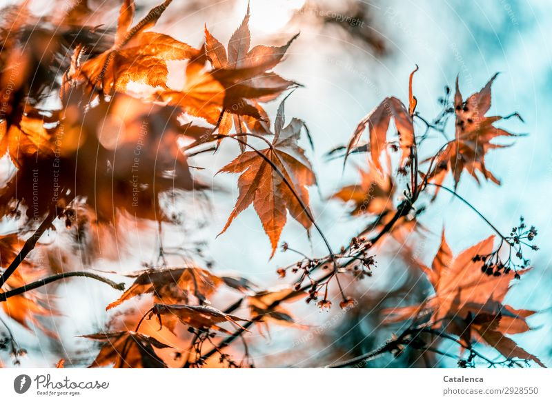 Sky Nature Plant Beautiful Red Tree Leaf Life Environment Blossom Spring Garden Orange Gray Moody Park