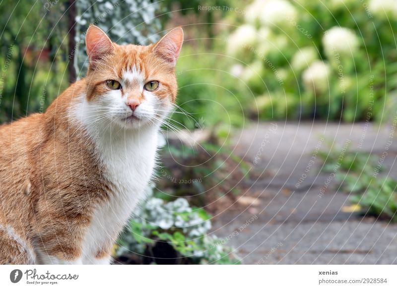 cat's eye Nature Spring Summer Garden Park Animal Pet Cat Animal face 1 Observe Looking Soft Green Red White Looking into the camera Cat eyes Domestic cat