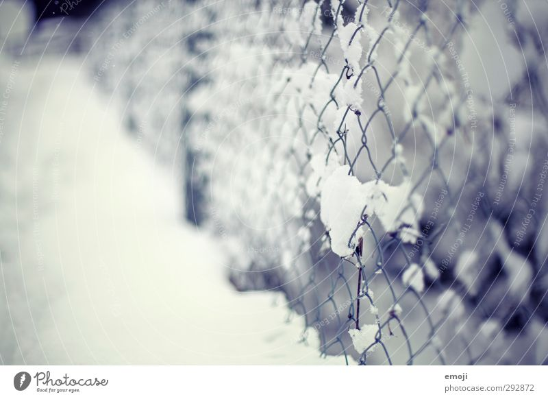 clingy Environment Nature Winter Snow Garden Park Cold Blue White Fence Wire netting Wire netting fence Colour photo Exterior shot Close-up Deserted Day