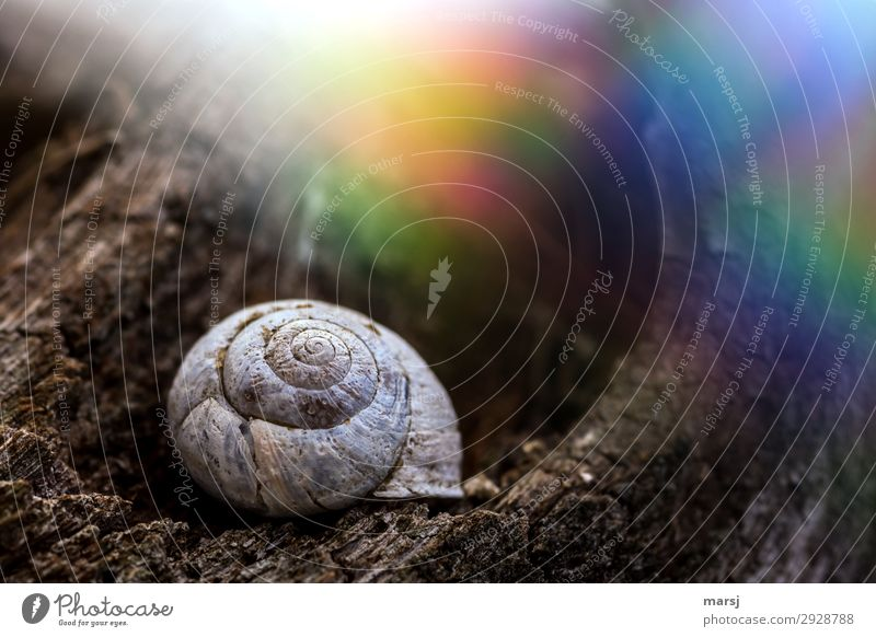 Old cottage with colourful surroundings Snail shell Spiral Light (Natural Phenomenon) Colour photo Whimsical Loneliness Perturbed Multicoloured Small Uniqueness