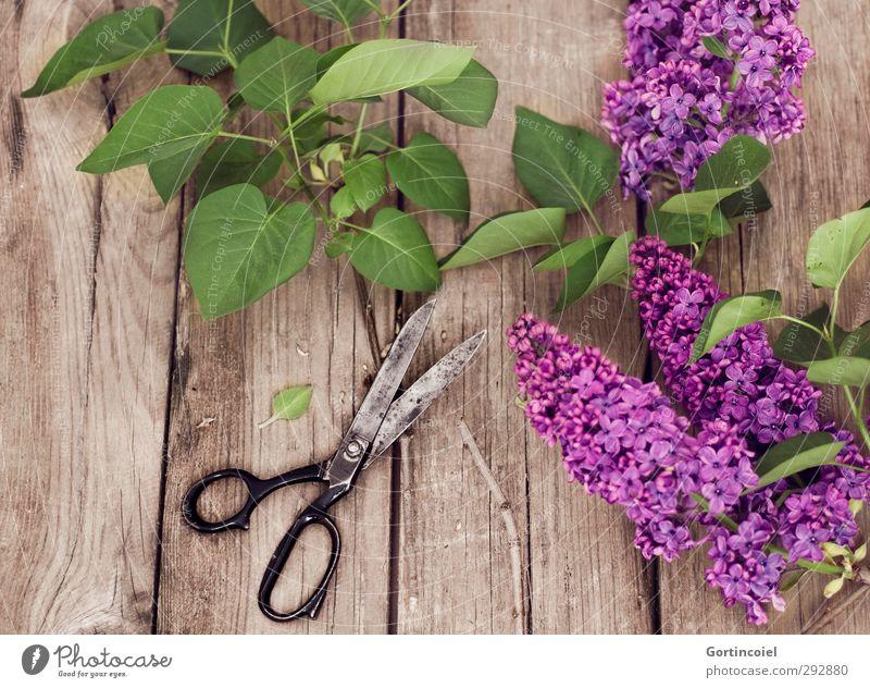 lilac Lifestyle Interior design Decoration Plant Tree Leaf Blossom Beautiful Green Violet Scissors Lilac Lilac leaf Bouquet ikebana Colour photo Interior shot