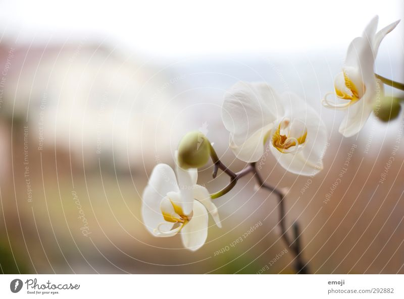 Nature White Plant Flower Environment Spring Blossom Fragrance Orchid