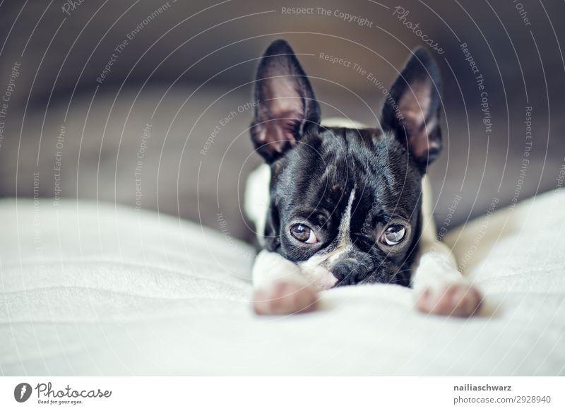 Dog Beautiful Relaxation Animal Loneliness Calm Joy Love Funny Style Small Flat (apartment) To enjoy Cute Curiosity Sleep