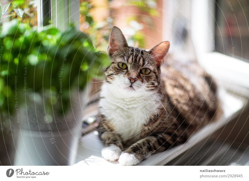 Cat at the window Tulip Window Animal Pet 1 Observe Relaxation To enjoy Looking Wait Beautiful Funny Curiosity Cute Soft Brown Green Happy Contentment