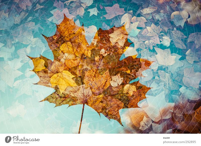 Translucent Environment Nature Plant Autumn Weather Beautiful weather Leaf Esthetic Exceptional Fantastic Sustainability Creativity Transience Autumn leaves