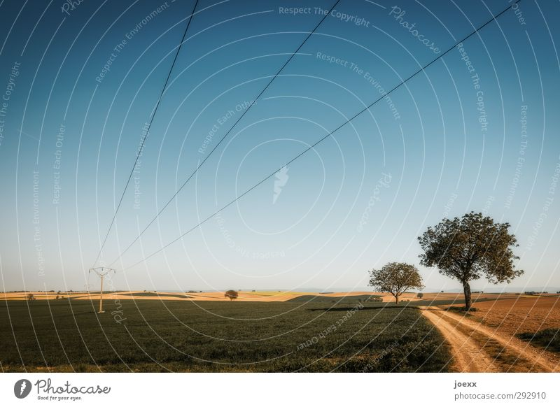 Long line Energy industry Landscape Cloudless sky Horizon Summer Beautiful weather Tree Field Lanes & trails Footpath Infinity Natural Blue Brown Green White
