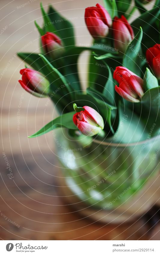 love of tulips Nature Plant Tulip Leaf Blossom Emotions Moody Bouquet Mother's Day Birthday Surprise Fragrance Spring Summer Colour photo Interior shot Blur