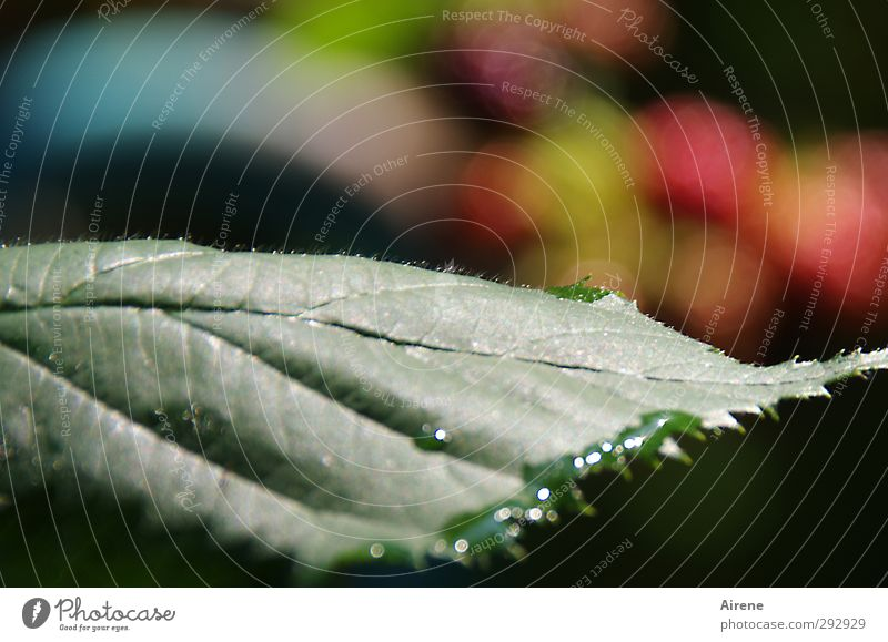 Nature Blue Green Summer Plant Red Leaf Environment Garden Natural Glittering Growth Illuminate Fresh Drops of water