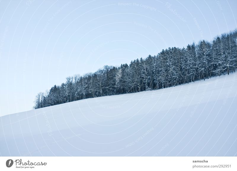 Sky Nature White Landscape Winter Forest Environment Cold Snow Natural Ice Weather Climate Hiking To go for a walk Frost