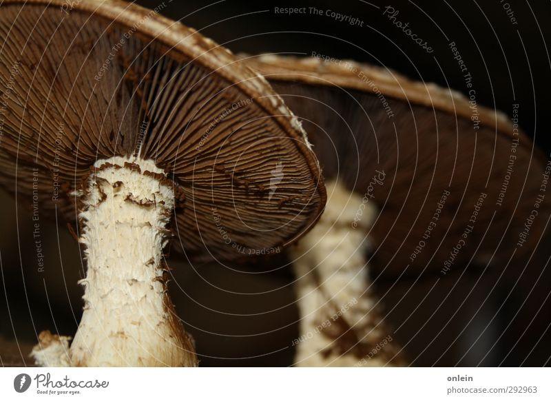 cheeky hat, Mr. Mushroom mushrooms Nature Plant Autumn Dirty Bizarre Tree fungus Mushroom cap mushroom foot Colour photo Interior shot Close-up Detail Deserted