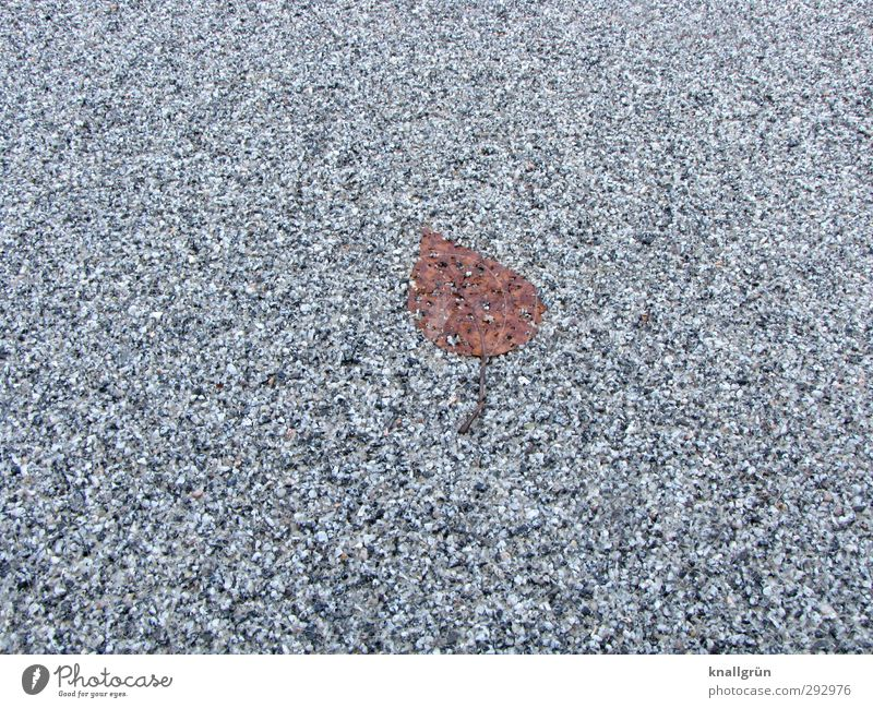 fossil Plant Winter Leaf Street Lie Old Cold Natural Town Brown Gray Emotions Loneliness Nature Transience Asphalt Level Colour photo Subdued colour
