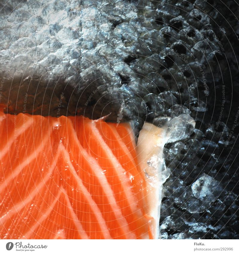 Sushi Factory Food Fish Nutrition Lunch Asian Food Healthy Eating Dead animal Orange Red Salmon filet Scales Fish dish scaly Remainder Flashy Lean Cooking