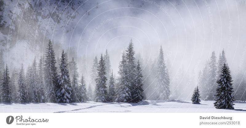 Vacation & Travel Blue White Tree Landscape Black Winter Forest Mountain Snow Ice Fog Hiking Beautiful weather Frost Alps