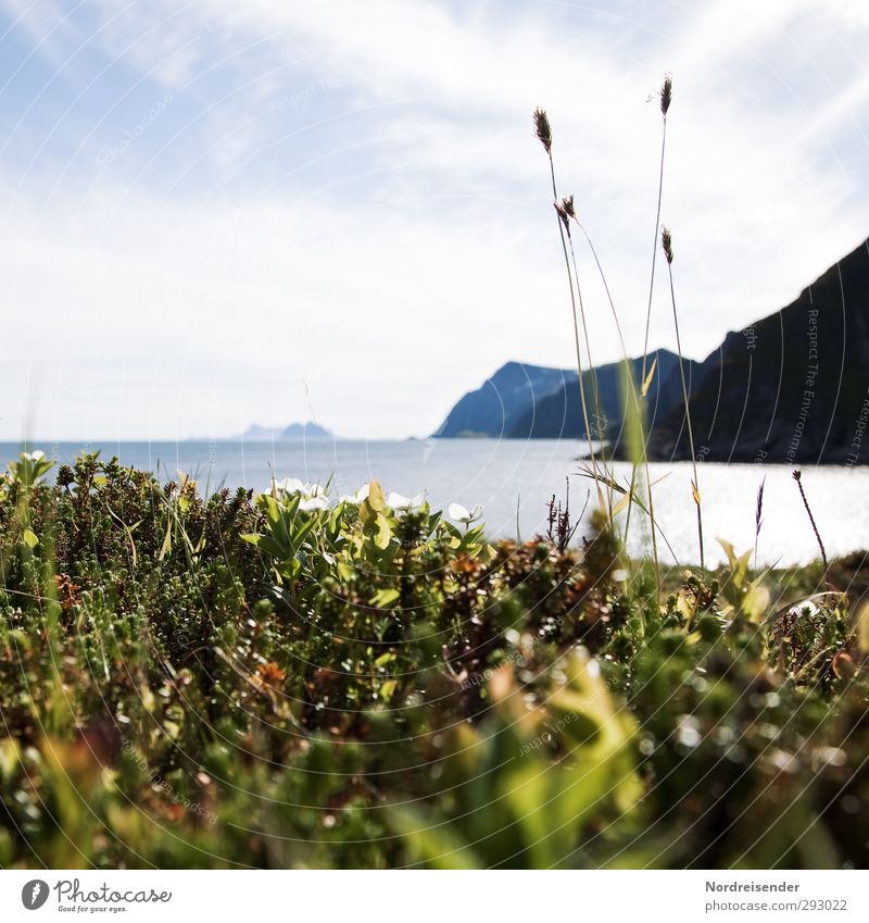 Summer in Lofoten.... Vacation & Travel Far-off places Freedom Summer vacation Ocean Island Nature Plant Elements Coast Bay Fjord Fragrance Relaxation Life Calm