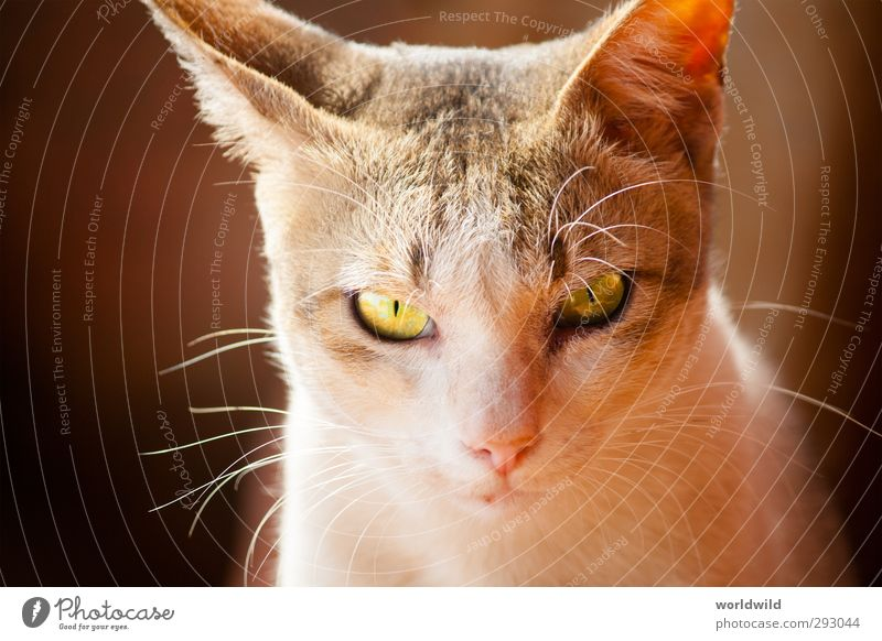 cat's eye Animal Pet Cat Animal face 1 Observe Esthetic Cuddly Gray White Love of animals Eyes Facial expression Looking Colour photo Exterior shot