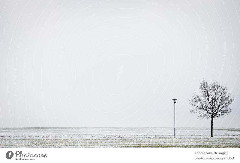 Sky White Plant Tree Loneliness Landscape Winter Calm Environment Cold Snow Gray Friendship Horizon Field Earth
