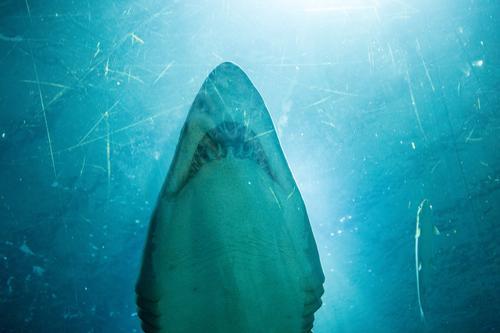 Animal Elegant Wild animal Esthetic Teeth Swimming Aquarium Shark Hunter Impressive