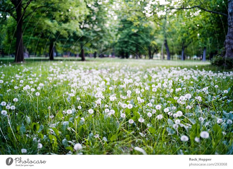 meadow with dandruff Relaxation Calm Trip Environment Nature Landscape Plant Tree Flower Grass Dandelion Park Meadow Vienna Austria Amusement Park Brown Green