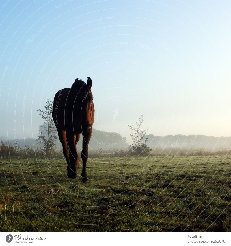 Sky Nature Plant Animal Environment Meadow Autumn Grass Natural Going Field Earth Fog Bushes Elements Horse