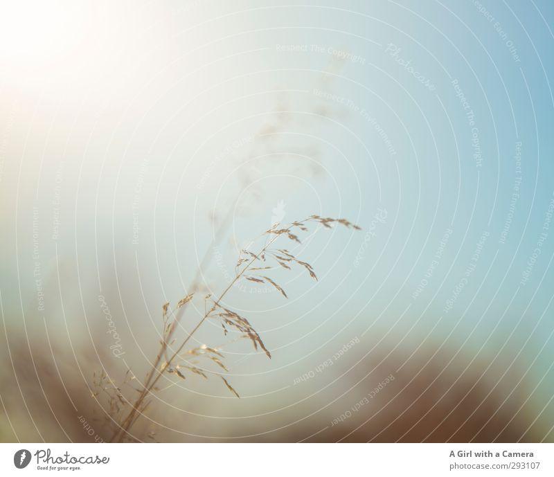 Nature Summer Plant Environment Meadow Autumn Grass Spring Illuminate Beautiful weather Grain Blade of grass