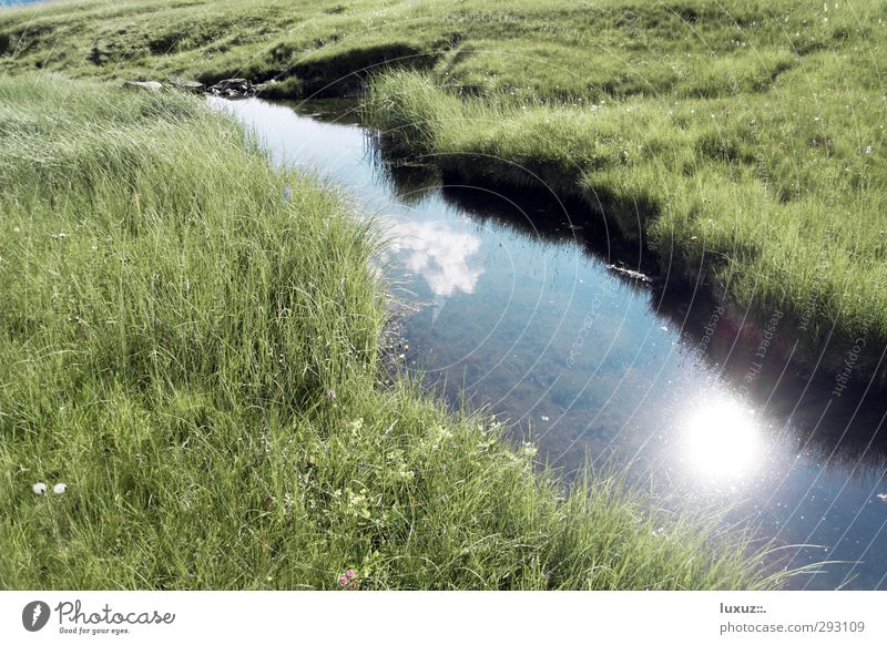 Water Drinking water Environment Nature Alps Bog Marsh Brook Fresh Clean Source Mountain stream common property basic supply Colour photo