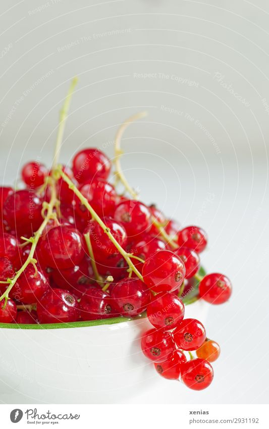 Red Currants Fruit Redcurrant Organic produce Vegetarian diet Diet Finger food Bowl Summer Autumn Fresh Healthy Delicious Sour Sweet Green White Harvest