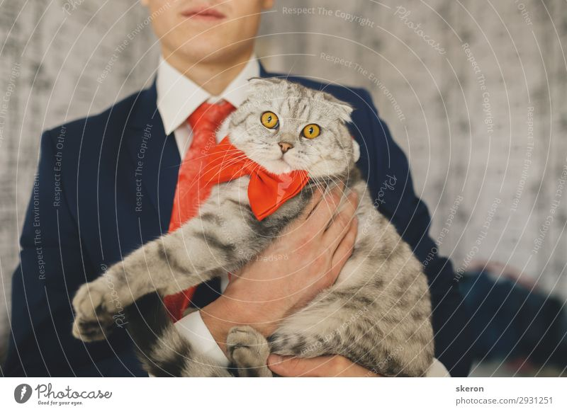 the groom on the wedding day holding a cat Lifestyle Leisure and hobbies Entertainment Feasts & Celebrations Wedding Parenting Education Work and employment