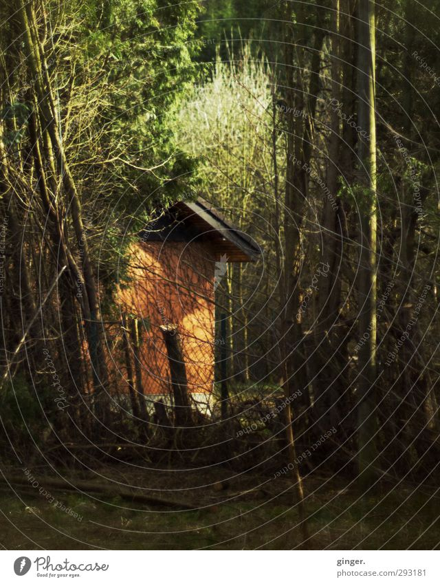 The hiding place Nature Autumn Beautiful weather Warmth Plant Tree Bushes Dark Wild Muddled Fence Pole Hide Impassable Orange Green Brown