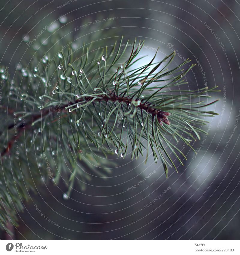 forest beauty Jawbone attentiveness Domestic Nordic Attentive forest bath Simple Pine needle Twig Coniferous trees Fragrance conifer branch tranquillity Forest