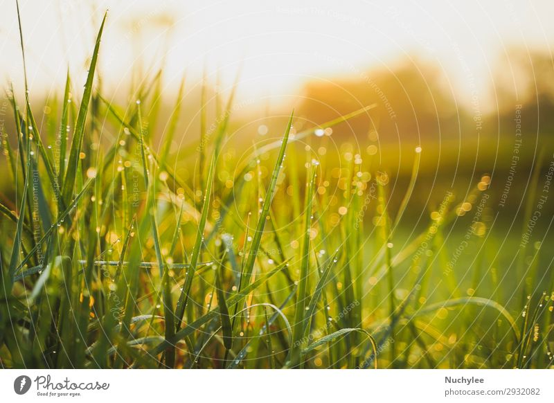 Beautiful green grass in the morning with dew water Summer Sun Garden Wallpaper Gardening Environment Nature Landscape Plant Spring Warmth Tree Grass Leaf