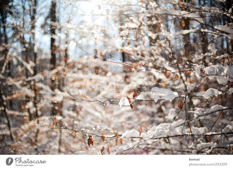 snow sunny day Environment Nature Landscape Plant Water Drops of water Sun Sunlight Winter Beautiful weather Ice Frost Snow Tree Bushes Leaf Twig Branch Forest