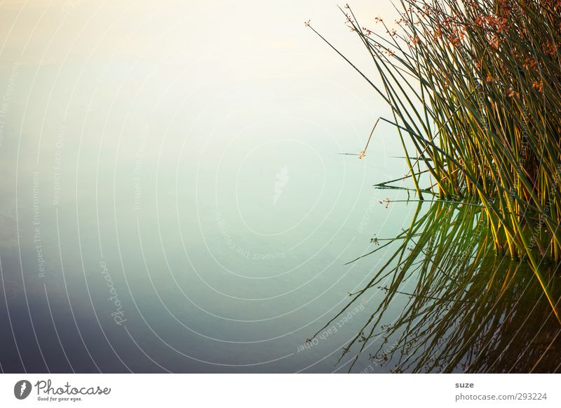 sea grasses Harmonious Calm Meditation Summer Environment Nature Landscape Elements Water Horizon Beautiful weather Grass Lakeside Authentic Dark Natural Green