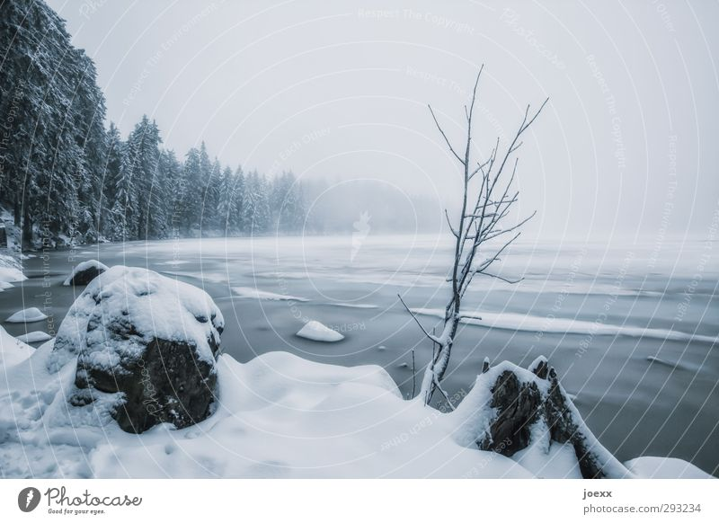 He'll be back Nature Landscape Sky Winter Bad weather Ice Frost Snow Plant Tree Lakeside Mummelsee Lake Cold Blue Black White Idyll Colour photo Subdued colour