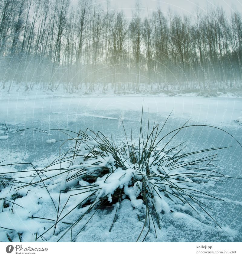 at the redspfuhlen Environment Nature Landscape Plant Animal Winter Ice Frost Snow Tree Grass Bushes Coast Lakeside Pond Cold Ice sheet Frozen National Park