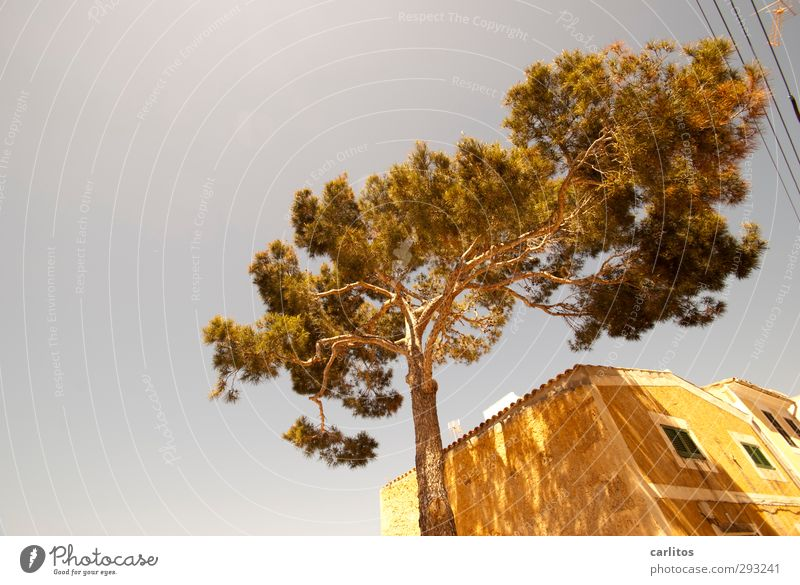 Old Summer Tree House (Residential Structure) Window Warmth Wall (building) Wall (barrier) Building Air Facade Beautiful weather Esthetic Roof Cable Tilt